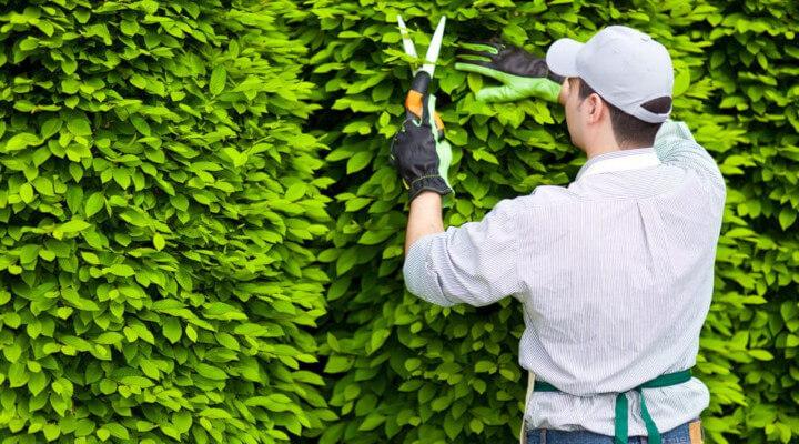 Jardineiro capacitado pode alcançar boas vagas no mercado